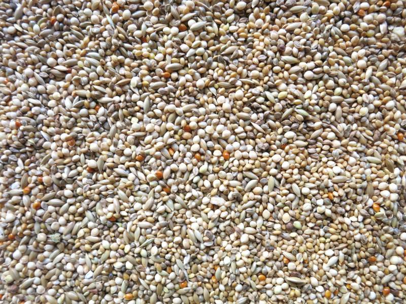 miscellaneous grains - Crops - Agriculture - 1st picture/image