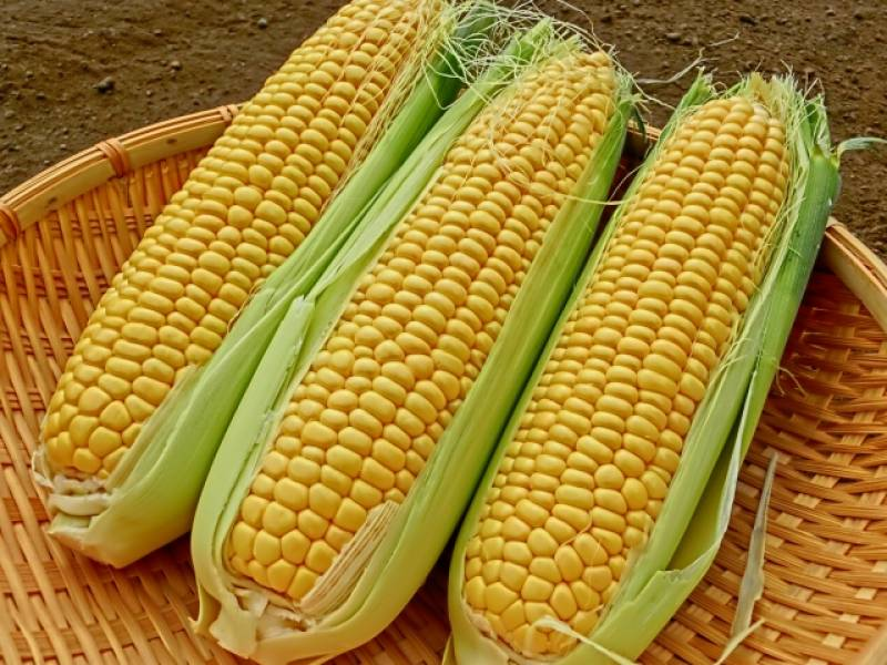 Sweet corn - Crops - Districts / Prefectures - 1st picture/image