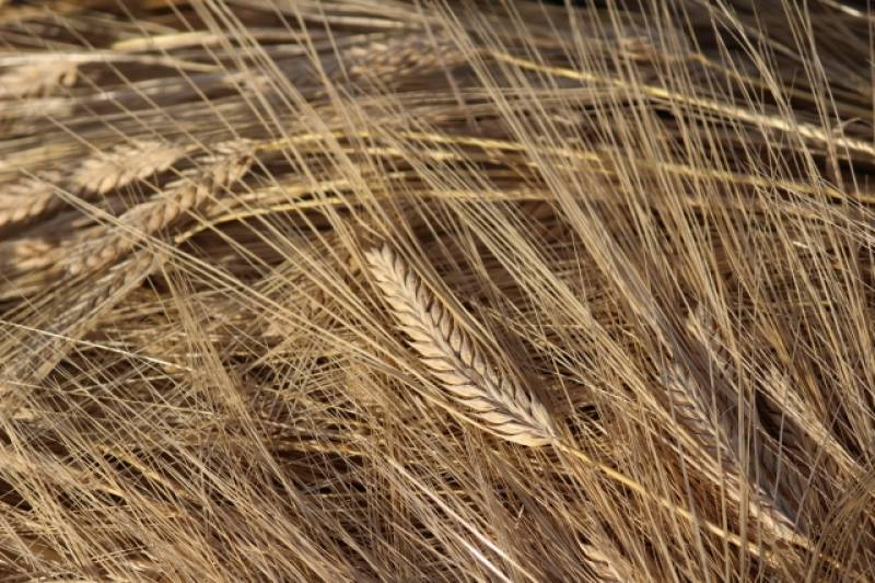 Wheat and barley - Crops - Nutrients - 1st picture/image