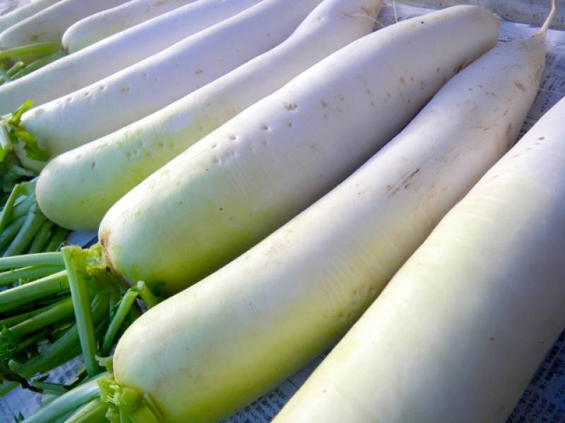 Daikon radish - Crops - Districts / Municipalities - 1st picture/image