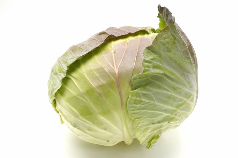 Cabbage - Crops - Nutrients - 1st picture/image