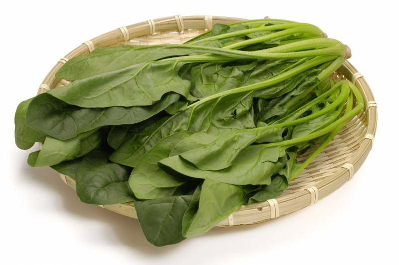 Spinach - Crops - Agriculture - 1st picture/image