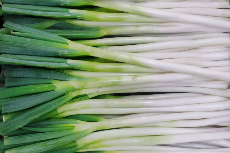 Welsh onion - Crops - Agriculture - 1st picture/image
