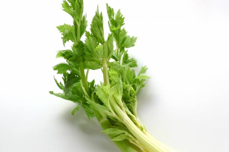 Celery - Crops - Districts / Prefectures - 1st picture/image