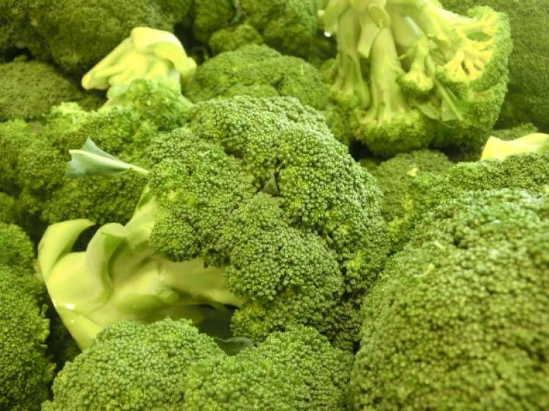Broccoli - Crops - Seasons - 1st picture/image