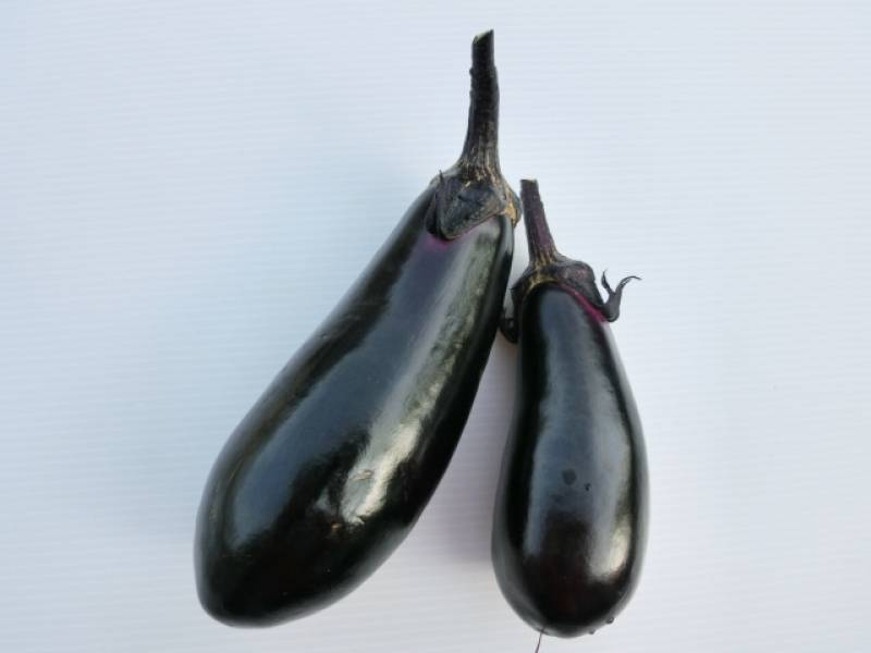 Eggplant - Crops - Districts / Prefectures - 1st picture/image