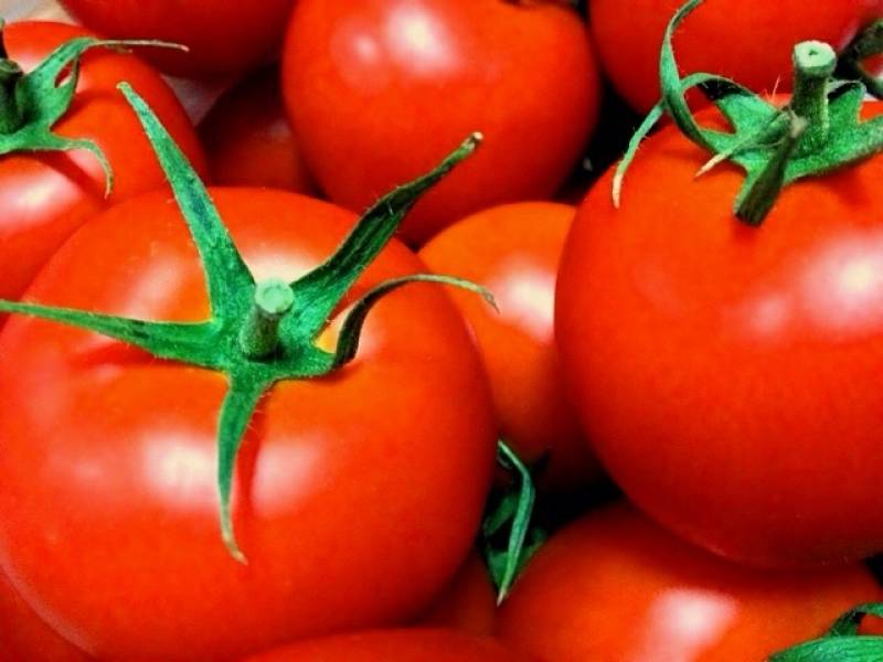 Tomato - Crops - Cons.trend - 1st picture/image
