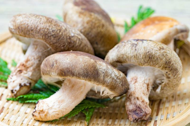Shiitake mushroom - Crops - Agriculture - 1st picture/image