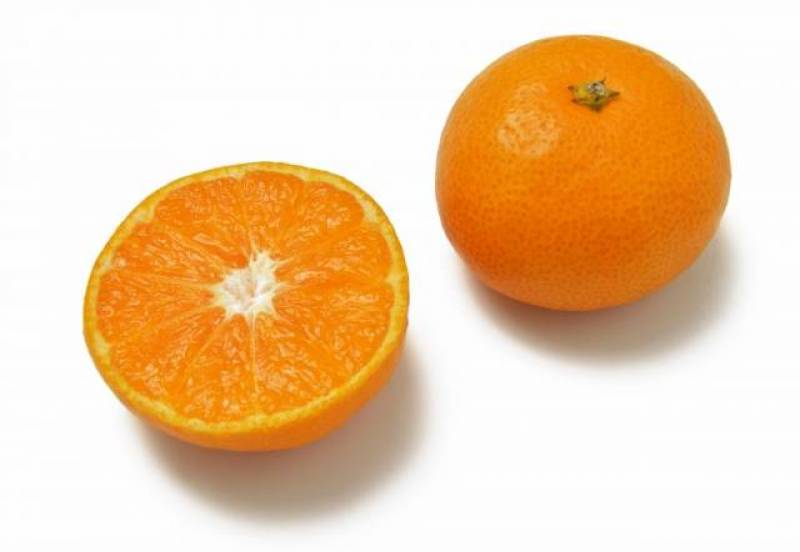 Citrus unshiu(Japanese orange, Satuma mandarin, Mikan) - Crops - Districts / Prefectures - 1st picture/image