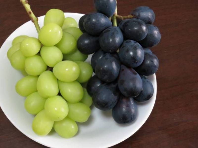 Grape - Crops - Agriculture - 1st picture/image