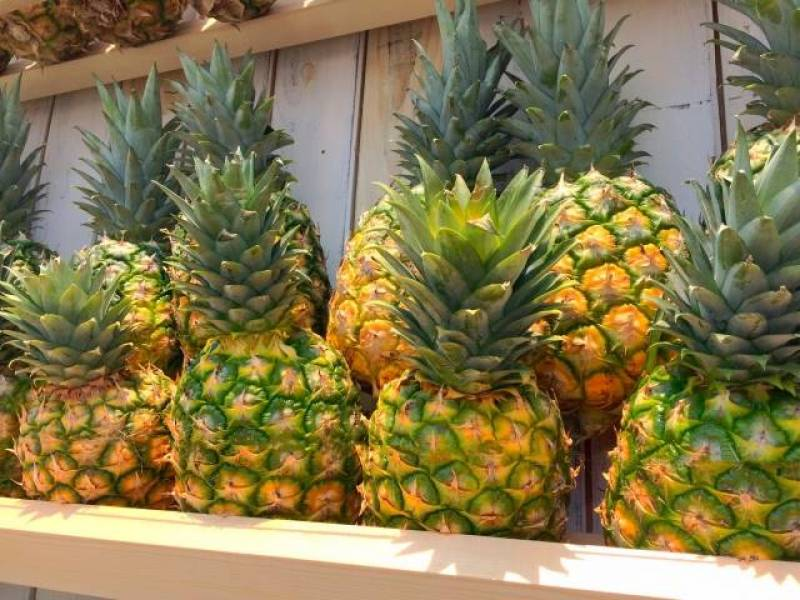 Pineapple - Crops - Nutrients - 1st picture/image