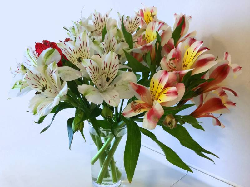 Alstroemeria - Crops - Overview - 2nd picture/image