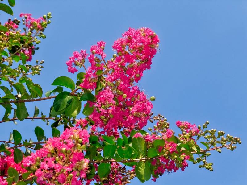 Flowering tree - Crops - Agriculture - 1st picture/image
