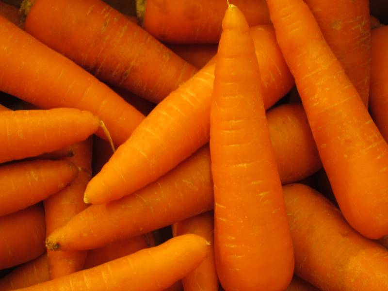Winter ninjin - Carrot's Cultivars/Varieties - 2nd picture/image