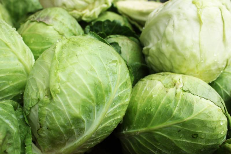 Summer autumn cabbage - Cabbage's Cultivars/Varieties - 2nd picture/image