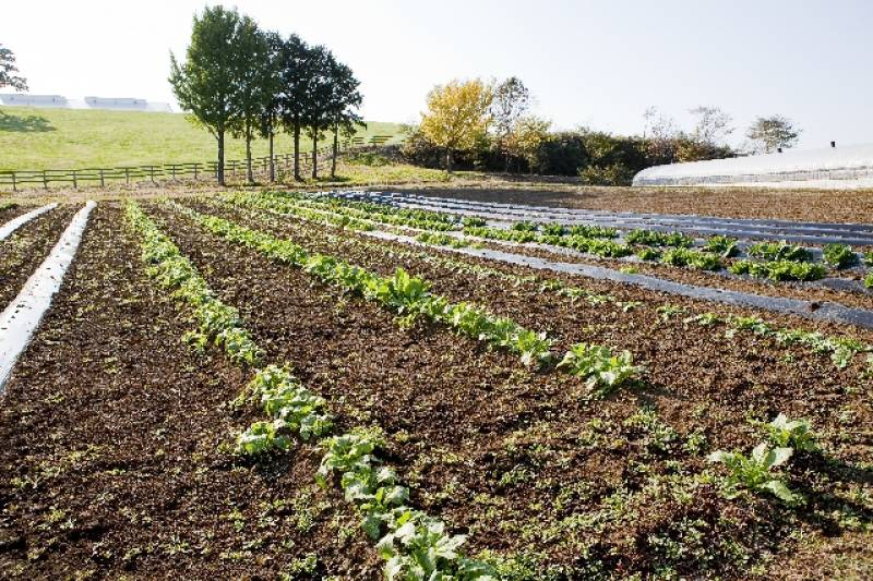 Yasaiya Farm (Sample) - 2nd picture/image - promote Japanese crop and agriculture [JapanCROPs]