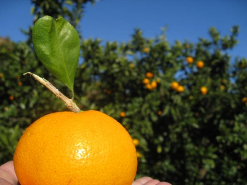 Fruit-ya Farm (Sample) - 1st picture/image - promote Japanese crop and agriculture [JapanCROPs]