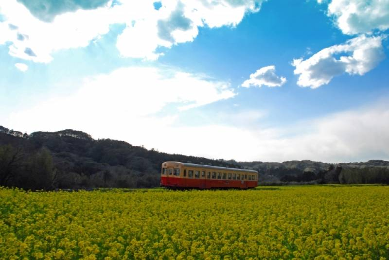 Chiba-ken - Districts / Prefectures - Kominato line - train runs in beatiful scenary - 1st picture/image