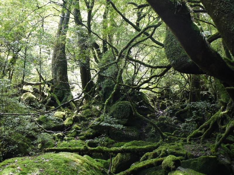 Kagoshima-ken - Districts / Prefectures - Yakushima island - beatiful island - 2nd picture/image