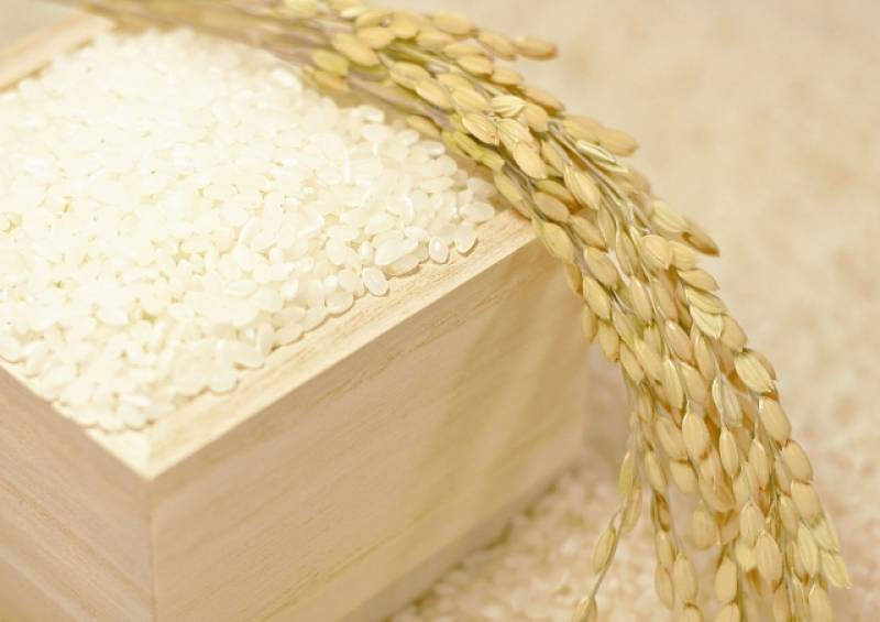 Rice 10 kg (Sample) - 1st picture/image - promote Japanese crop and agriculture [JapanCROPs]